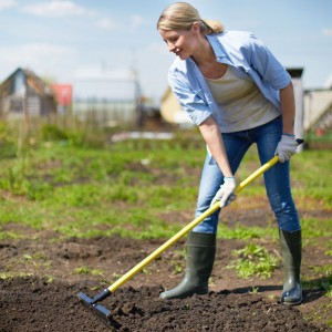Frau arbeitet Kompost ein